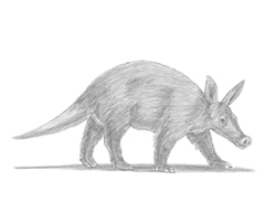 How to Draw an Aardvark