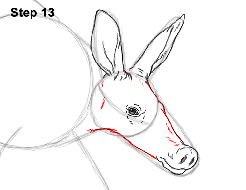 How to Draw an Aardvark Anteater Walking 13