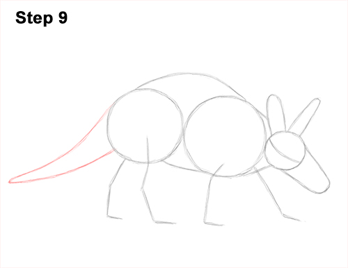 How to Draw an Aardvark Anteater Walking 9