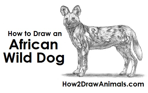 African Wild Dog Drawing