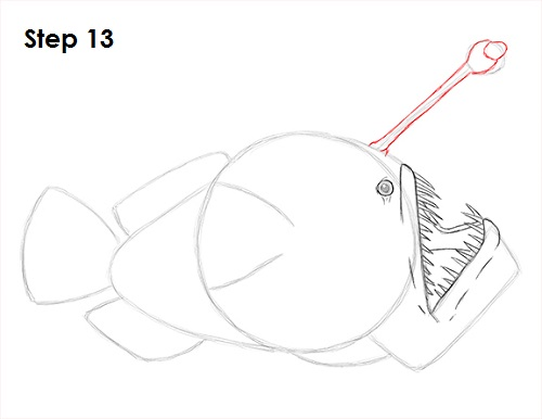 Draw Anglerfish 13