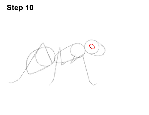 How to Draw Carpenter Pavement House Ant Insect Bug 10