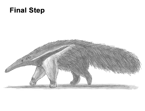 Draw Giant Anteater