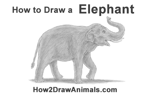 How to Draw an Asian Elephant