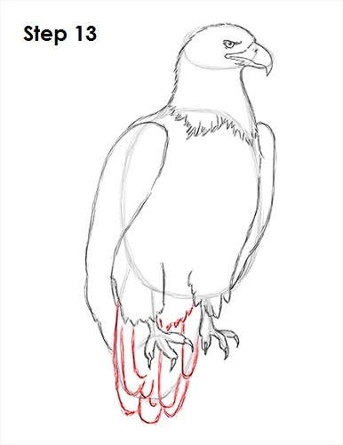 Draw Bald Eagle 13