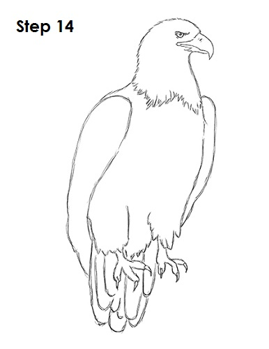 Draw Bald Eagle 14
