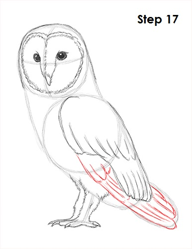Draw Barn Owl 17 Step
