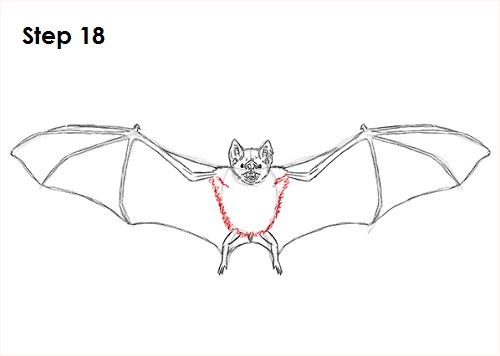 Bats Wings Drawing