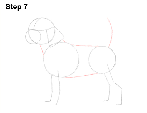 Draw Beagle Dog 7