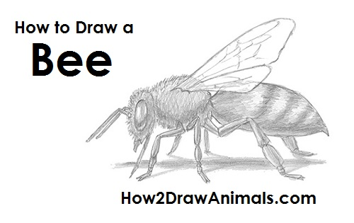 How to draw a bumble bee - photo#8