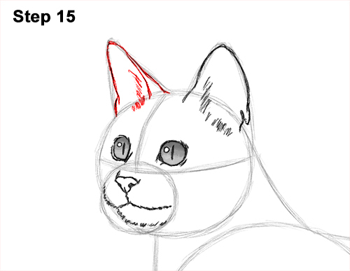 How to Draw Bengal Kitten Cat Spots 15