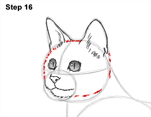 How to Draw Bengal Kitten Cat Spots 16