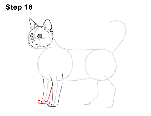 How to Draw Bengal Kitten Cat Spots 18