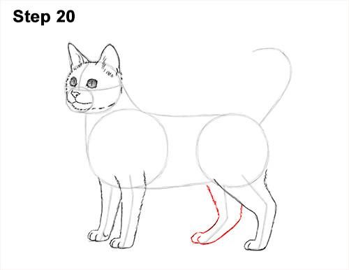 How to Draw Bengal Kitten Cat Spots 20