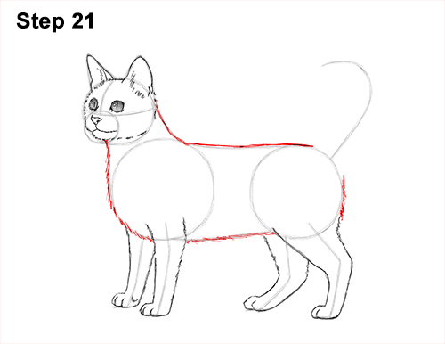 How to Draw Bengal Kitten Cat Spots 21