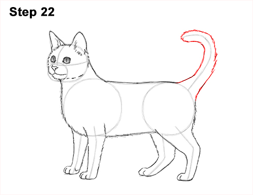 How to Draw Bengal Kitten Cat Spots 22
