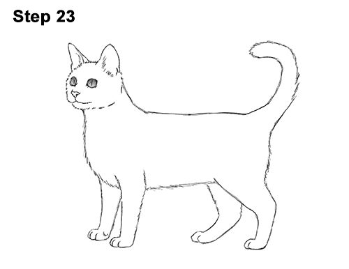 How to Draw Bengal Kitten Cat Spots 23