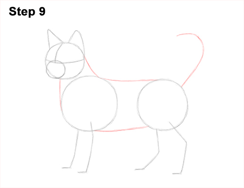 How to Draw Bengal Kitten Cat Spots 9