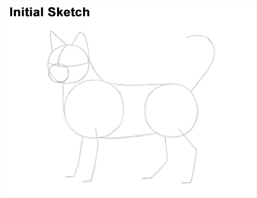 How to Draw Bengal Kitten Cat Spots Initial Sketch