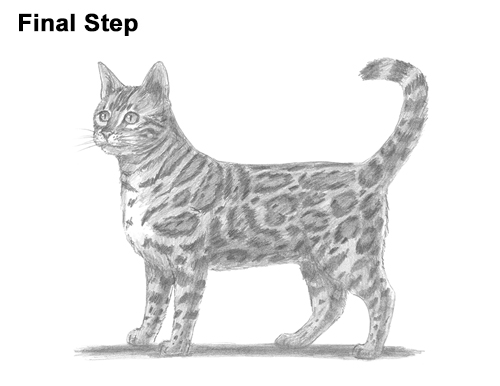 How to Draw Bengal Kitten Cat Spots title=
