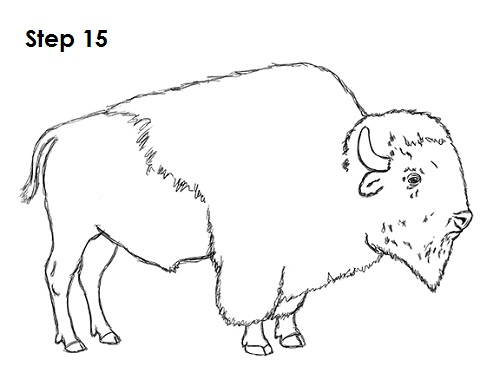 Draw Bison 15