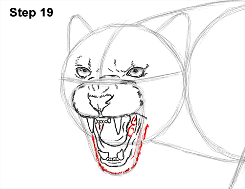 How to Draw an Angry Black Panther Roaring 19