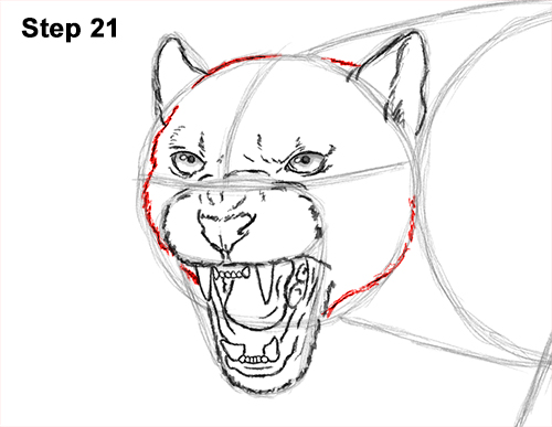 How to Draw an Angry Black Panther Roaring 21