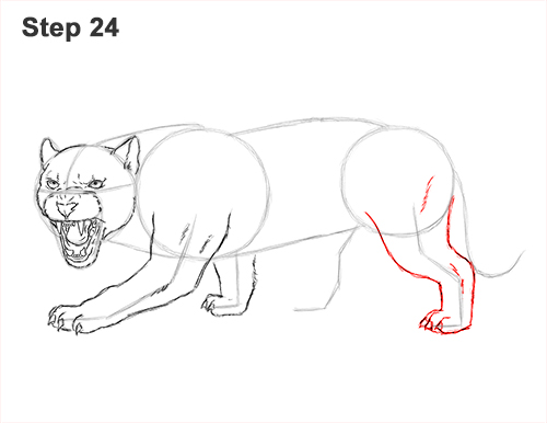 How to Draw an Angry Black Panther Roaring 24