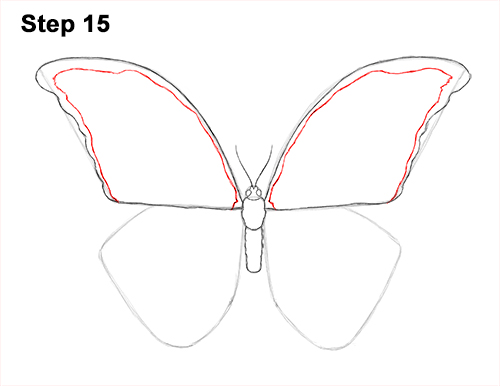 How to Draw a Butterfly (Blue Morpho) Growling Dog Drawing