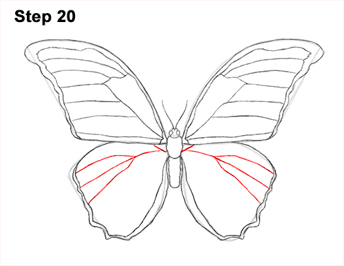 Draw blue morpho butterfly 20