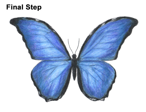 how to draw a butterfly blue morpho