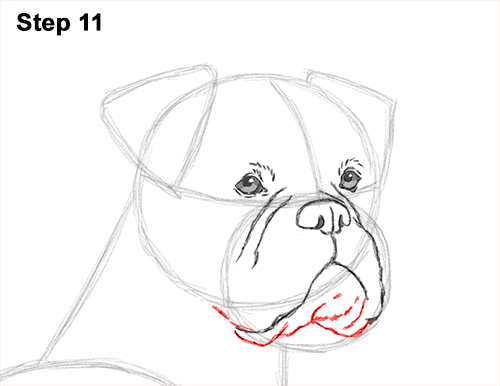 Boxer dog drawing simple