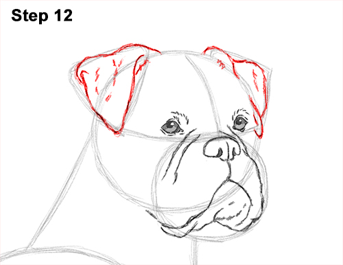 how to draw my dog
