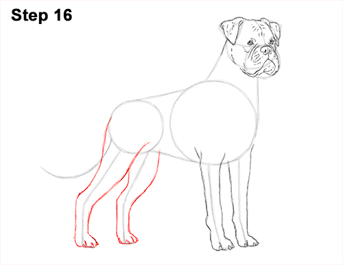 Draw Boxer Dog 16