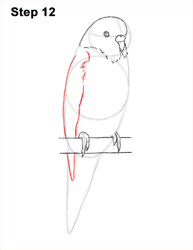 How to Draw Cute Budige Budgerigar Parakeet Bird Color Blue 12