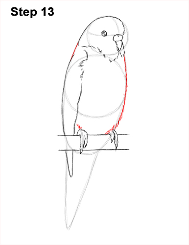 How to Draw Cute Budige Budgerigar Parakeet Bird Color Blue 13