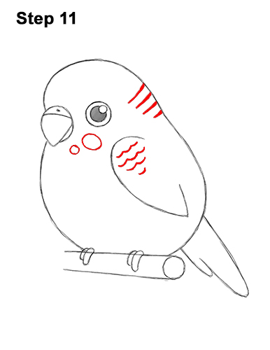 How to Draw Cute Cartoon Budgie Parakeet Bird 11