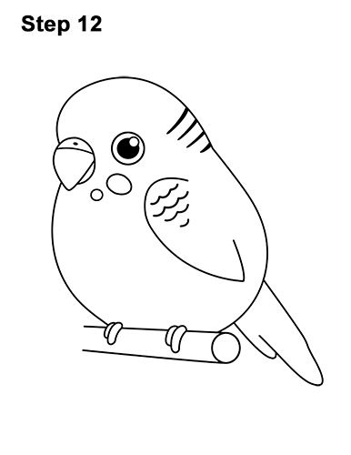How to Draw Cute Cartoon Budgie Parakeet Bird 12