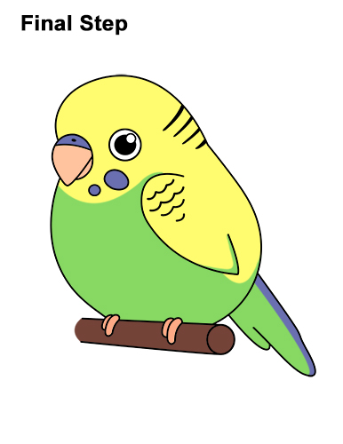 How to Draw Cute Cartoon Budgie Parakeet Bird