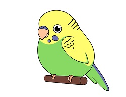 How to Draw a Cute Cartoon Budgie Parakeet Budgerigar