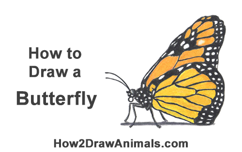 How To Draw A Butterfly Monarch Video Step By Step Pictures