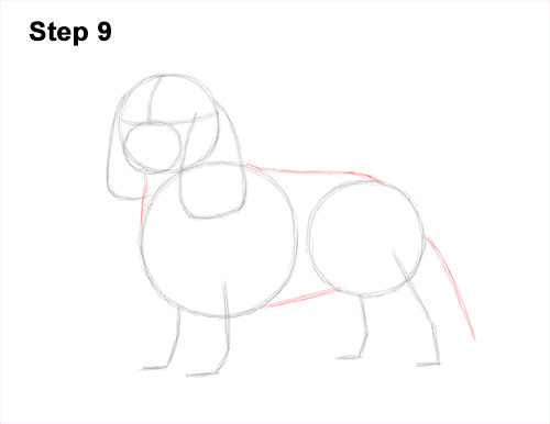 How to Draw a Cavalier King Charles Spaniel Puppy Dog 9