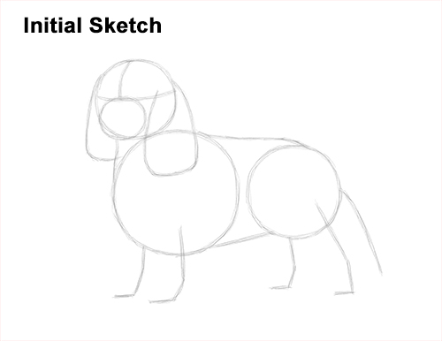 How to Draw a Cavalier King Charles Spaniel Puppy Dog Guide Lines