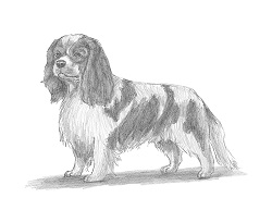 How to Draw a Cavalier King Charles Spaniel Dog