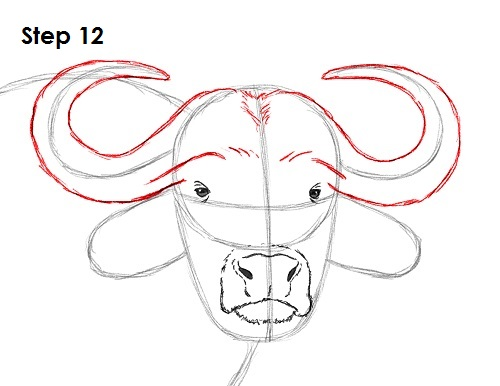 Draw African Cape Buffalo 12