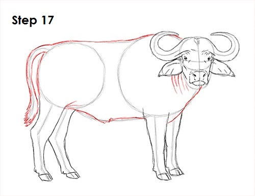 Draw African Cape Buffalo 17
