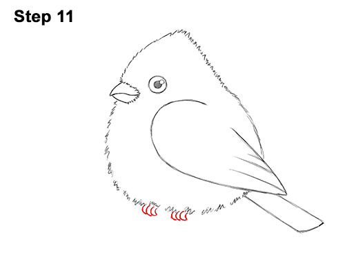 How to Draw Cute Little Cartoon Red Cardinal Snow Berries 11