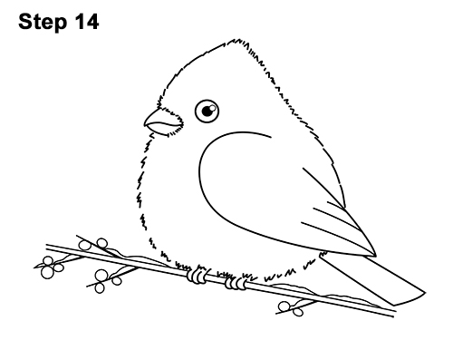 How to Draw Cute Little Cartoon Red Cardinal Snow Berries 14