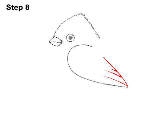 How to Draw Cute Little Cartoon Red Cardinal Snow Berries 8