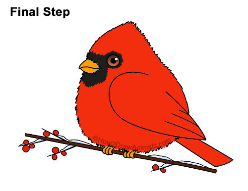 How to Draw Cute Little Cartoon Red Cardinal Snow Berries 15